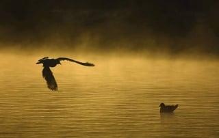 ۵ توصیه حرفهای برای عکاسی از پرندگان در حال پرواز