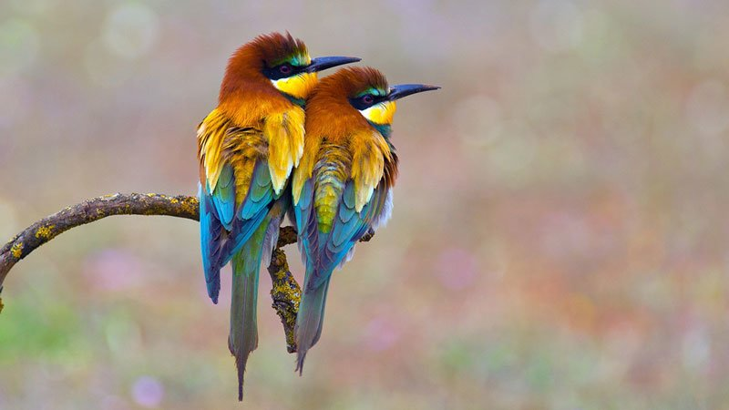 5 روش برای عکس برداری از پرندگان
