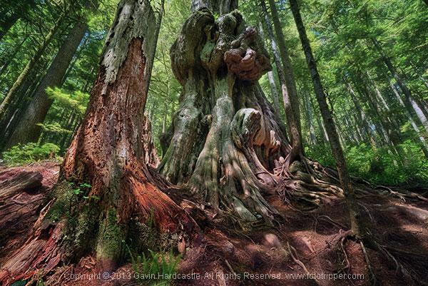 ۴ نکته برای بهبود عکاسی از درختان
