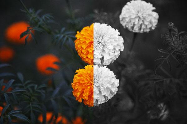 ۶ نکته که به شما کمک می کند تصمیم بگیرید به صورت رنگی یا سیاه و سفید عکاسی کنید