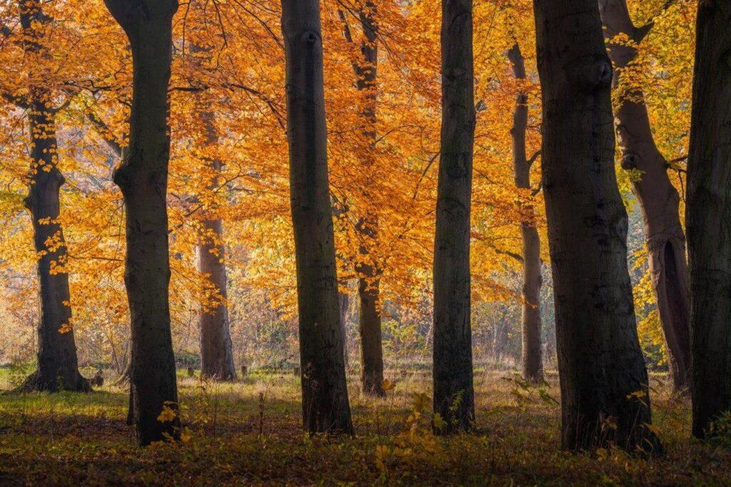 12ترفند برای عکاسی در پاییز